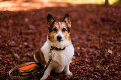 https://flic.kr/p/AkRfCY | Autumn Pose | Canon EOS 5DS R *EF50mm F1.4USM