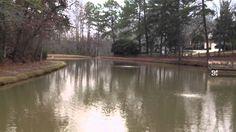 (704) 816-0526 - Charlotte NC - (864) 381-7663 Greenville SC - Asheville-Platinum Ponds and Lake Management. Durham rescue ponds.  #pondmanagement  Algae, aquatic weeds, chara, curly leaf pondweed, eurasion watermilfiol, hydrilla/ elodea, naiad, bladderwort, coontail, sage pondweed, american pondweed, cattails, duckweed, southeastern pond management, south east pond management, fish pond management, farm pond management, lake pond management, large pond management, pond maintenance