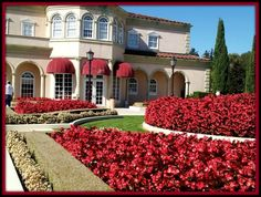 The beauty of Ferrari-Carano Winery #ChampionsofHome #AD #CleverGirls