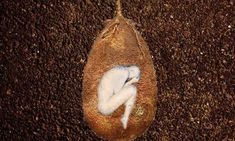 Organic Burial Pods Bring Whole New Meaning to Family Tree