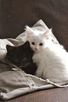 А потом хозяйка девочка принесла чёрного котёнка