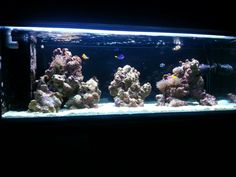 My reef tank. A few more coral would be nice