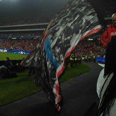 Somos a força de Portugal Nn boys sempre presentes até morrer Benfica ou morte!