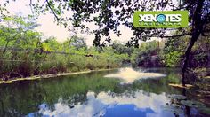 Xenotes Oasis Maya is a tour just 20 minutes south from Cancun, in Puerto Morelos, where four types of cenotes await you in the middle of the jungle. Enjoy different activities in each on of them: kayak, rappel, snorkel and ziplines.