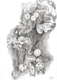Юдаев-Рачей Юрий. Одуванчики, лист лопуха и манжетка
