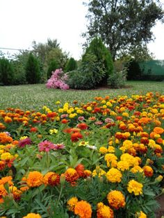 Snimka.bg: Градината_2014_1 - Цветя - nedelcheva