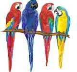 Image detail for -macaws