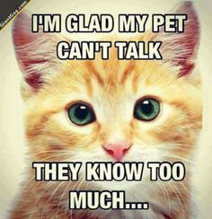 Comical cats and kittens, cat humour. For the funniest pet cats photos and quotes visit www.funnyjoke.lol