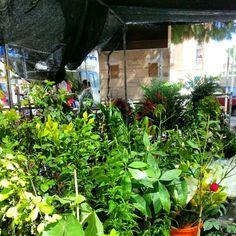 En el mercado de murcia. Las plantas.