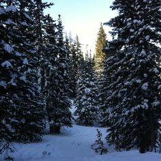 Park city skiing the trees