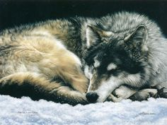 The Wolf Dreams, The Sleeping Wolf in Snow, Lesley Harrison Animal Paintings