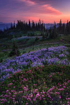 Nisqually Valley of Washington, USA