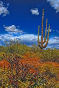 ✮ Sonoran Desert