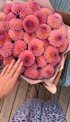 Luxury Flowers, My Flower, Beautiful Flowers, Flower Aesthetic, Belle Photo, House Plants, Red Roses, Planting Flowers, Floral Arrangements