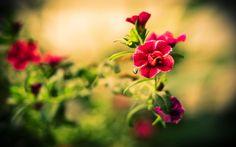 Beautiful Flowers Wallpaper Flowers Nature Wallpapers in jpg 1024×768 Wallpapers Of Beautiful Flowers (55 Wallpapers) | Adorable Wallpapers