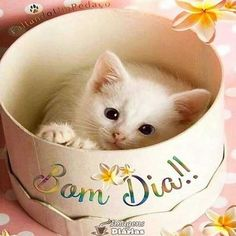 Morning Quotes For Friends, Good Morning Messages, Fluffy Kittens, Cute Kittens, Animals And Pets, Baby Animals, Cute Animals, Kitten Care, Snoopy Love