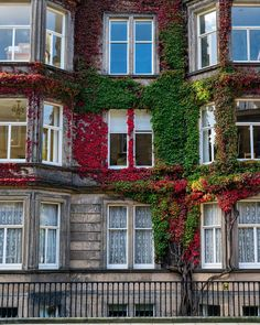 Signs of Autumn in #Edinburgh #Scotland  Captured with the #Sony #a7rII and Canon 24-70 using @sigmaphoto #mc11 adapter
