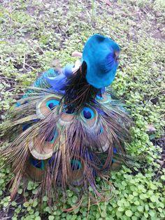 20140929 161216 by FloriCiobanu on DeviantArt Deviantart, Bird, Animals, Animais, Animales, Animaux, Birds, Animal, Dieren