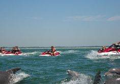 Dolphin watch on jet skis at Thomas Outdoor Watersports in North Myrtle Beach #MYRDreamVacation