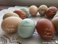 A Rainbow of Egg Colors...VERY informative article on the color of eggs and which chickens lay certain colored eggs!