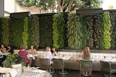 Living Wall @ True Food Kitchen in Newport Beach by Scott Hutcheon of Seasons Landscaping. Plants used are heucheras, ajuga, prathia, spider plant, and black mondo grass. Featured on freshdirt.sunset.com.