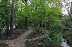 Tony Avent's garden