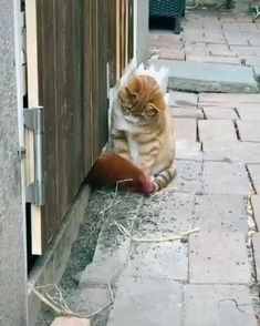 Funny Cute Cats, Cute Baby Cats, Cute Little Animals, Cute Funny Animals, Kittens Cutest, Cats And Kittens, Cute Funny Baby Videos, Baby Dogs, Videos Funny