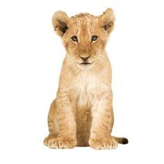Jut en Juul Lifestyle for Kids : Safari Friends - LIon Cub leeuw Wall Stickers Animals, Wall Stickers Home Decor, Wall Decals, Wall Art, Lion Photography, Design3000, Amsterdam, Super Cute Animals, Adorable Animals