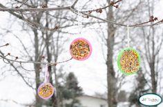 Success! plastic lids, peanut butter, bird seed, yarn.....bird feeders!