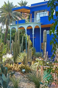 Towering cacti at Jardin Majorelle in Marrakech, once owned by the late Yves Saint Laurent.