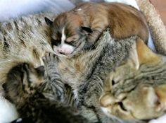 """Из серии """"Усыновления в мире животных"""""""