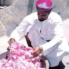 Rose petals, Oman, to extract rose water and rose oil
