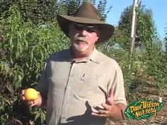 Backyard Fruit Tree Basics ....  Tom Spellman talks about the main points of Backyard Orchard Culture. Topics include managing tree size, successive ripening fruits, dealing with poor draining soil, mulching and more. (2011)