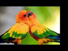 El condor pasa Leo Rojas Ecuador - YouTube