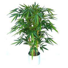 Bambus 125cm