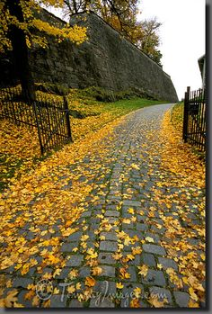 fall norway | Stock Photos/Pictures: Fall colors - Oslo, Norway