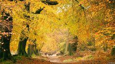 Ashridge Forest by Laura McGregor Woodland Plants, Autumn Nature, Winter Trees, Dream Garden, Trees To Plant, Autumn Colours, Colors, Europe, Landscape