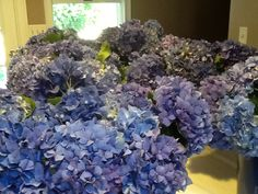 Sent these hydrangea to my fb friend Linda Nicolar from our Hydrangea Farm in Carpinteria, CA.....and they arrived today 9-03-14 for her Friday 9-05 Wedding in Hull MA.!! Here's Her Response.... Wow, they are so beautiful. Thank you for your patience with me. I will send you pics of the arrangements and bouquets tomorrow. Thank you again...Linda