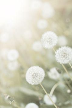 ...the sweet wildflower breath of spring... ~Terri Guillemets