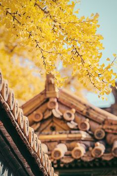Yellow Trees and Brown Roof · Free Stock Photo Brown Roofs, Nature Photography, Travel Photography, Free Photography, Vegetable Garden Planner, Yellow Tree, Porch Decorating, Free Stock Photos, Free Photos