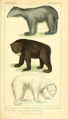 The Animal Kingdom: Arranged according to its organization, serving as a foundation for the natural history of animals, Vol 1, G. Cuvier, P.A. Latreille, H. McMurtie, 1834.