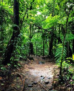 A #trail to #discovery at Arenal #Volcano National Park.  Rainforest #hike : @worldcitizensud! #CostaRicaExperts #vacations #CostaRica