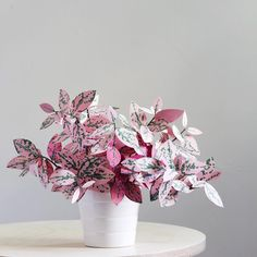 """Weekend paper plant project: the #polkadotplant aka #hypoestesphyllostachya or just #hypoestes! But who really needs to say more besides... PINK! I…"""