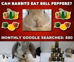 Can rabbits eat bell peppers? Rabbit Eating, Rabbit Food, Rabbit Gif, Rabbits, Bunny, Stuffed Peppers, Canning, Animal, Youtube