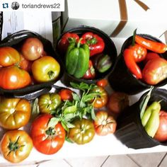 #Repost shoutout to @toriandrews22!  Awesome harvest! All grown in #hydroponic #dutchbuckets. Great job!  #hydroponics #foodgarden #growyourownfood #urbanagriculture #apartmentgarden #vegetablegarden #indoorgarden #harperponics