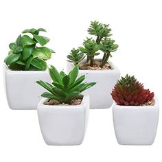 Knowing how to clean fake plants, whether they're plastic or silk, will help protect their beauty while reducing dust and allergens in your home.