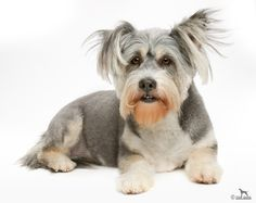 Tell me this dog doesn't look like Nick Nolte.