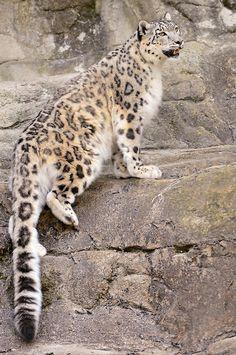 Djamila climbing