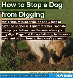 how to make my dog stop digging holes
