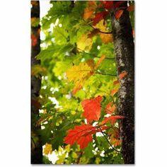 Trademark Fine Art Oak Leaves Canvas Art by Philippe Sainte-Laudy, Size: 22 x 32, Multicolor